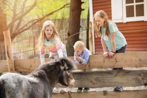 Parken Zoo häst